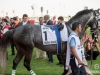 horse_Worldcup2015_002.jpg