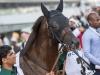 horse_Worldcup2015_003.jpg