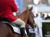 horse_Worldcup2015_004.jpg