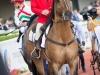 horse_Worldcup2015_009.jpg
