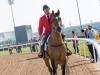 horse_Worldcup2015_010.jpg