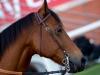 horse_Worldcup2015_015.jpg