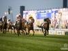 horse_Worldcup2015_020.jpg