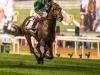 horse_Worldcup2015_022.jpg