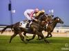horse_Worldcup2015_024.jpg