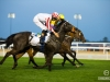 horse_Worldcup2015_025.jpg