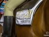 horse_Worldcup2015_039.jpg