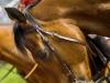 horse_Worldcup2015_040.jpg